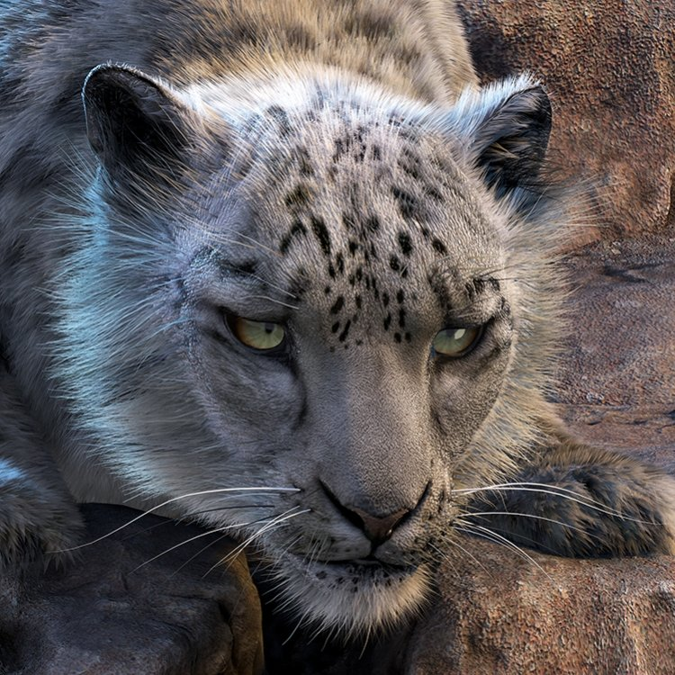 3D Snow Leopard